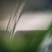 falling water by pistache