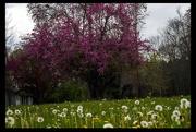 27th Apr 2018 - Spring - Allergies