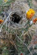 27th Apr 2018 - Bird's Nest Among the Needles
