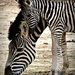 Mother and baby by judithdeacon