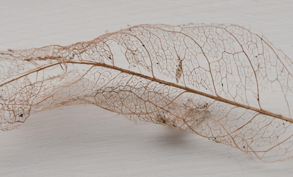 leaf lace by brigette