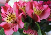 28th Apr 2018 - Spring Bouquet