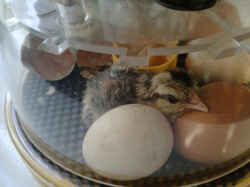 Hello Chick by plainjaneandnononsense