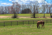 26th Apr 2018 - A photo from my recent visit to the horse barn.