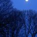 Moon (almost full)