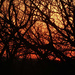 Sunset sky through tree branches by mcsiegle