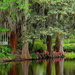 Peaceful scene by the lake at Magnolia Gardens by congaree