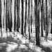 ICM-Forest Walk by darylo