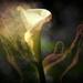 Seeking Illumination