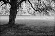 28th Apr 2018 - Tree at the Waters Edge