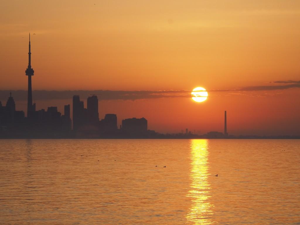 Full Blown Sun by selkie