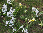 1st May 2018 - Flowers in My Lawn