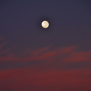 2nd May 2018 - Moonset