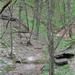Katy Trail #9679