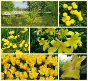 4th May 2018 - yellow