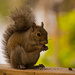Mrs Squirrel Having a Snack! by rickster549