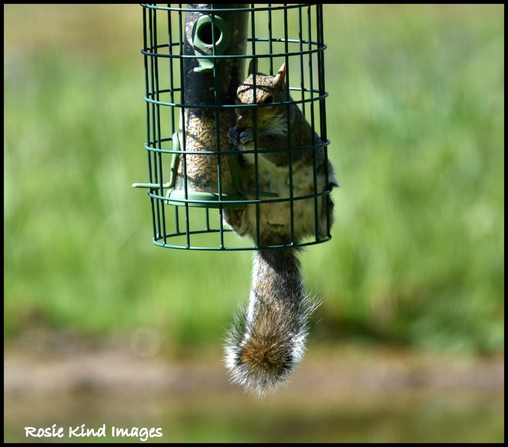 Squirrel proof?! by rosiekind