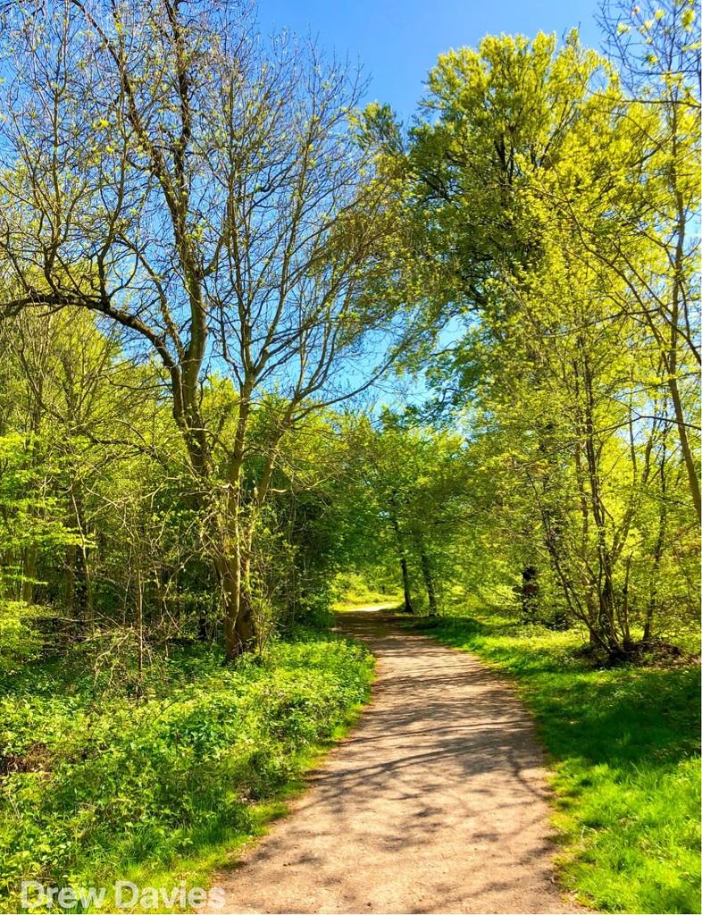 Woodland walk  by 365projectdrewpdavies