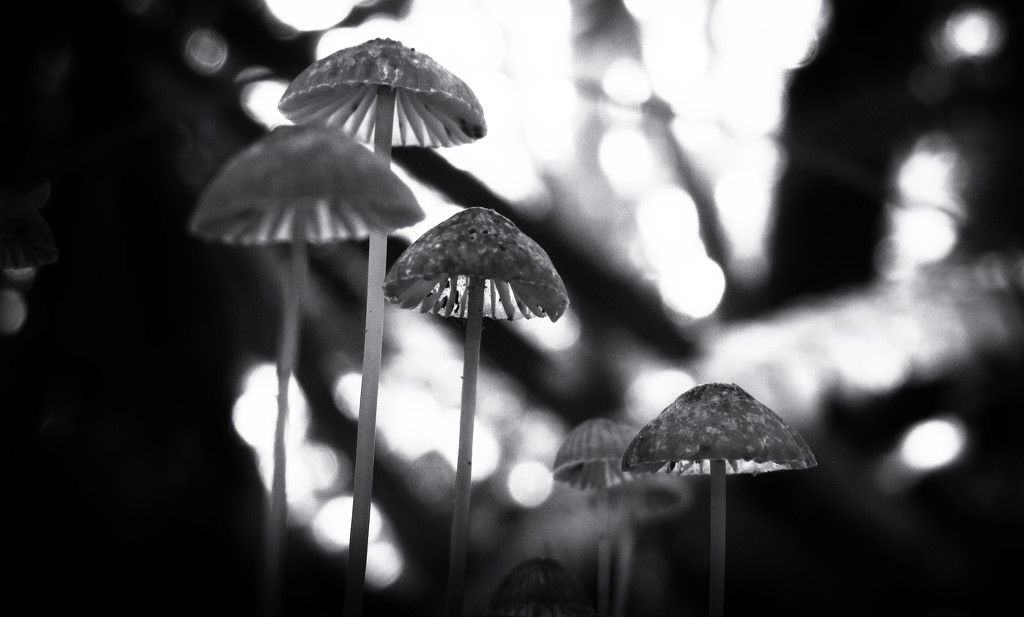 shrooms by kali66