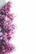 6th May 2018 - spring half