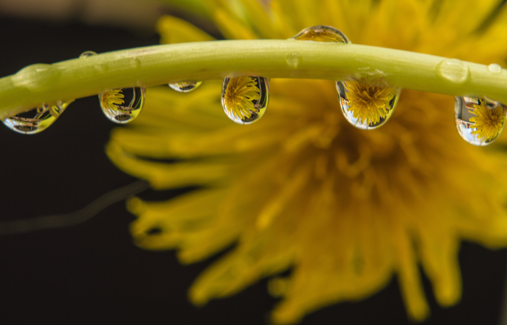 Yellow drops by fbailey