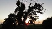 5th May 2018 - edge cut setting sun