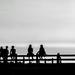 Evening Friends by jaybutterfield