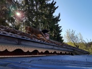9th May 2018 - Checking the roof