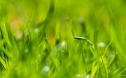 7th May 2018 - Green grass
