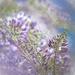 wisteria weave by pistache