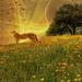 Cheetah's Terrain