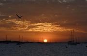 10th May 2018 - A Smoky Sunset_DSC8364