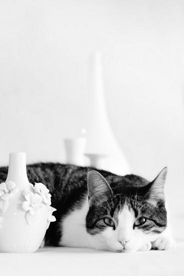 2018-05-10 Plan B album / feline photobombing still life by mona65