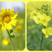 Mellow Yellow Collage