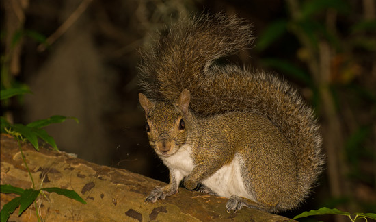 Night Time Squirrel! by rickster549