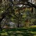 By the lake, Charles Towne Landing, Charleston, SC