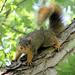 Squirrel!!! by cjwhite