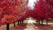 11th May 2018 - Autumn on the Granite Belt, Queensland