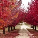 Autumn on the Granite Belt, Queensland by hrs