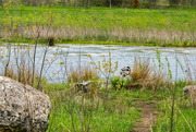 11th May 2018 - Mallard Boulder Landscape