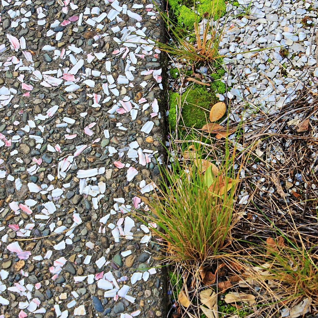 Up the garden path  by kiwinanna