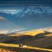 Autumn Morning in Central Otago by yaorenliu