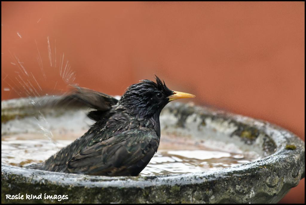 Enjoying  a bath by rosiekind