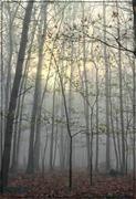 7th May 2018 - Foggy Morning