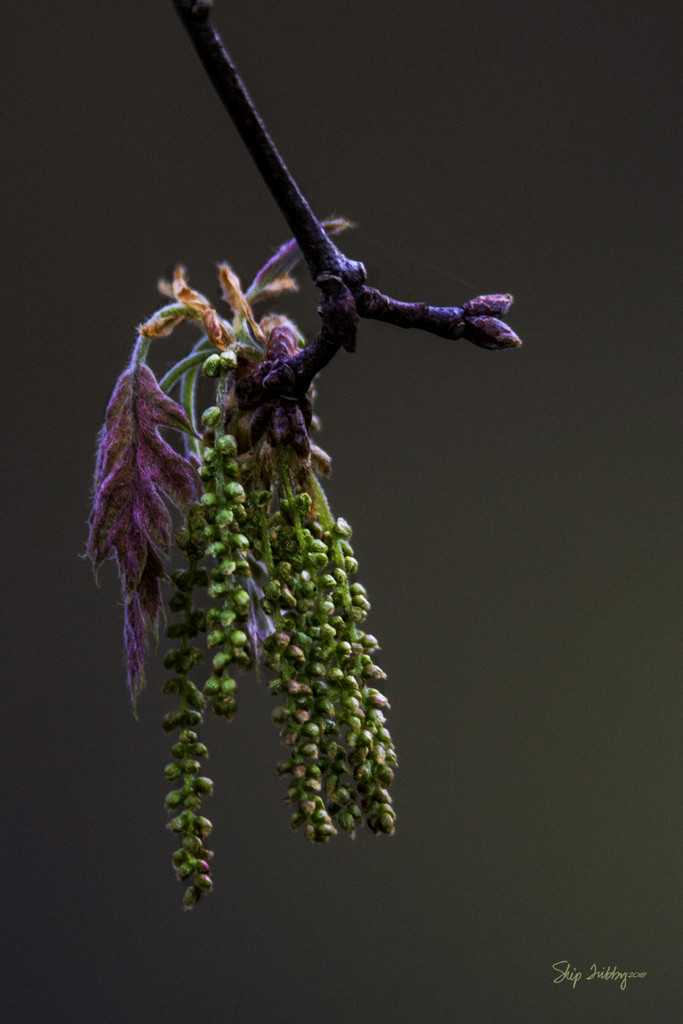 New Leaves with Seeds by skipt07