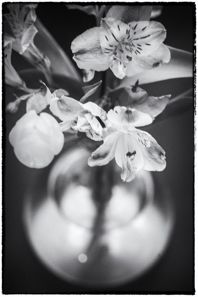 Lilies and tulip by domenicododaro