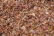13th May 2018 - Autumn leaves