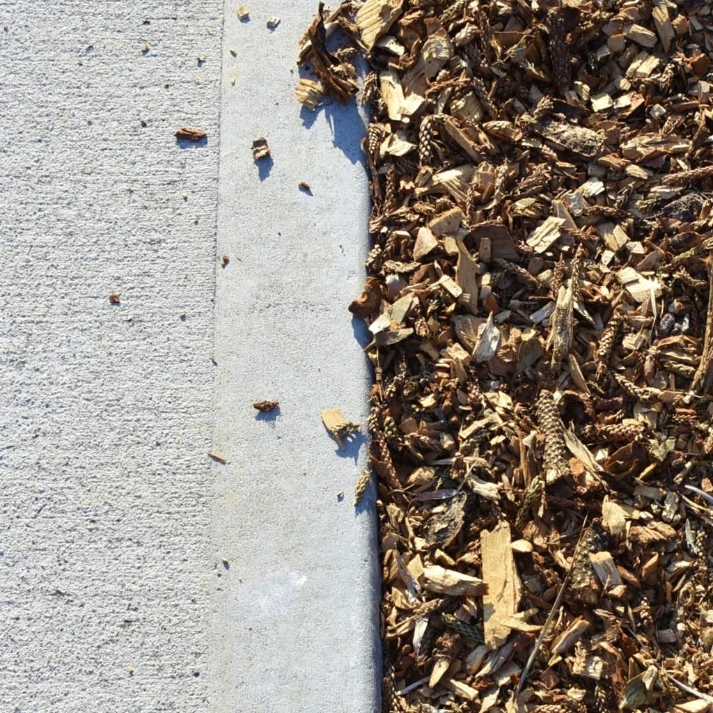 Half Mulch, Half Cement_DSC8527 by merrelyn