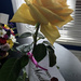Yellow Rose for Mothers Day