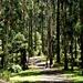 Forest walk down to Olinda Falls